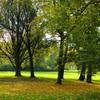 Parkanlage, Kunstfotografie, Halle, Hain