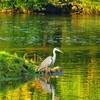 Saale, Kunstfotografie, Herbst, Naturfotografie