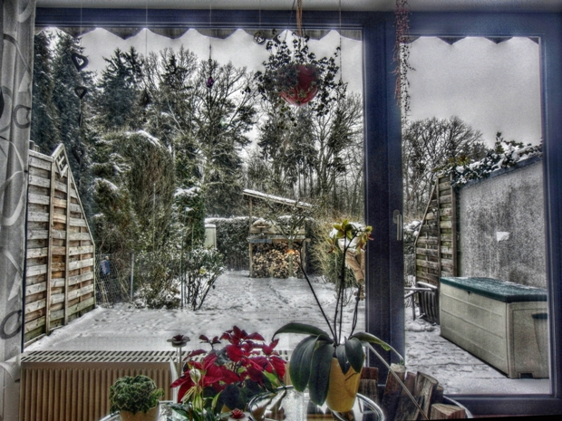 Winter, Frost, Fenster, Ausblick, Schnee, Blumen