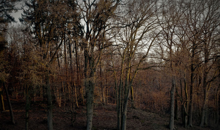 Baum, Wald, Sonnenuntergang, Hdr, Fotografie