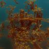 Blätter, Auftauchen, Gold, Blattgold
