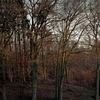 Baum, Wald, Sonnenuntergang, Hdr