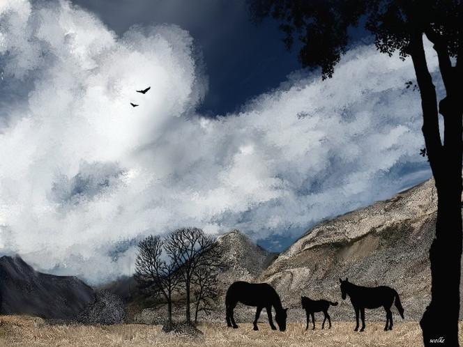 Wolken, Stute, Hang, Fohlen, Hain, Hengst