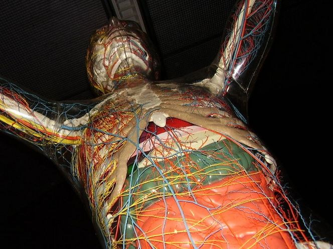 Ausstellung, Skuriles, Nahaufnahme, Museum, Menschen, Skulptur