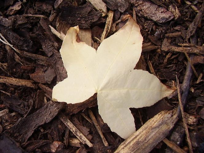 Blätter, Rindenmulch, Beet, Natur, Makro, Pflanzen