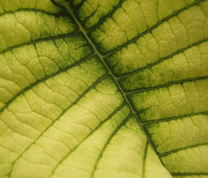 Pflanzen, Makro, Blätter, Natur, Grün, Blumen
