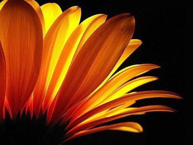 Natur, Aster, Licht und schatten, Blumen, Nahaufnahme, Blüte
