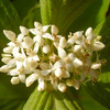 Weiß, Natur, Makro, Pflanzen