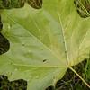 Natur, Blätter, Pflanzen, Makro