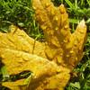 Herbst, Blätter, Gelb, Natur