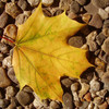 Blätter, Gelb, Laub, Natur