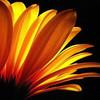 Aster, Natur, Licht und schatten, Blumen