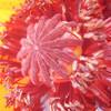 Blüte, Mohn, Natur, Stempel