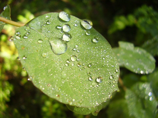 Natur, Pflanzen, Blätter, Tautropfen, Fotografie, Morgen