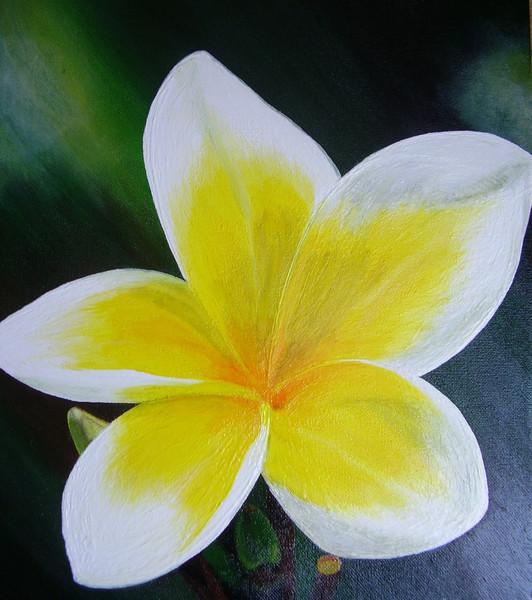 Blüte, Gelb, Weiß, Magnolien, Blumen, Malerei