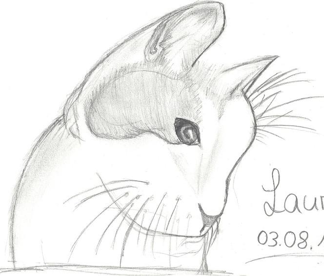 Katzenzeichnung, Zeichnungen, Tiere, Katze