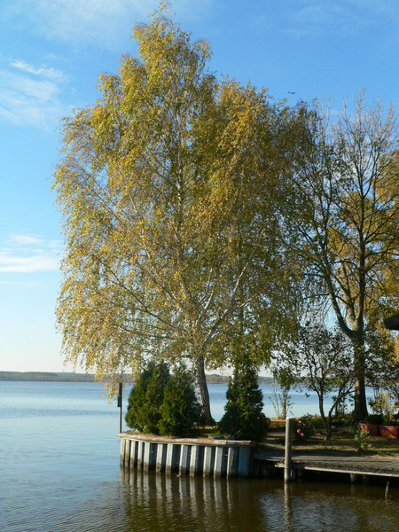Stimmung, Wasser, Blätter, Baum, See, Herbst