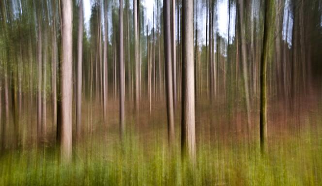Wald, Herbst, Landschaft, Farben, Baum, Weg