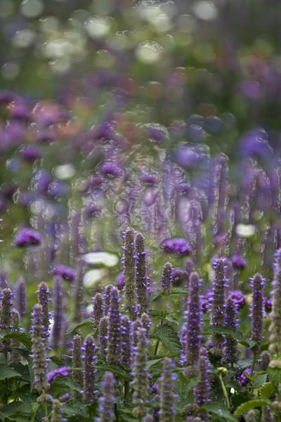 Farben, Blau, Blumen, Feld, Licht, Garten