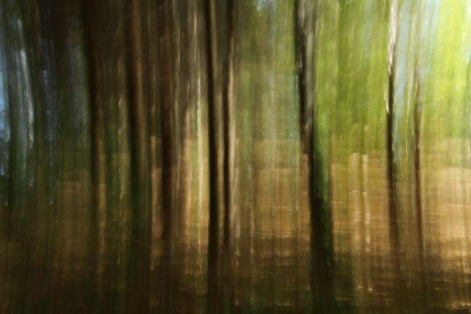 Natur, Herbst, Baum, Farben, Wald, Licht