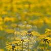 Gelb, Feld, Natur, Licht