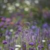 Feld, Licht, Natur, Garten