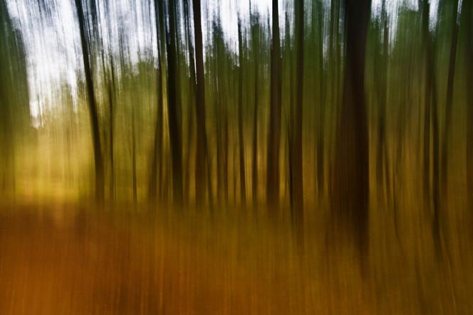 Weg, Landschaft, Herbst, Farben, Baum, Wald