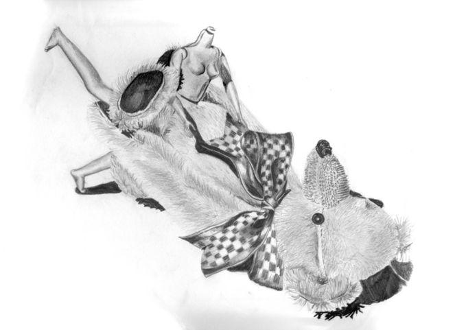 Schleife, Bleistiftzeichnung, Teddybär, Puppe, Zeichnungen