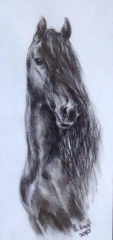 Pferdeportrait, Kohlezeichnung, Pferde, Friese, Zeichnungen, Tiere