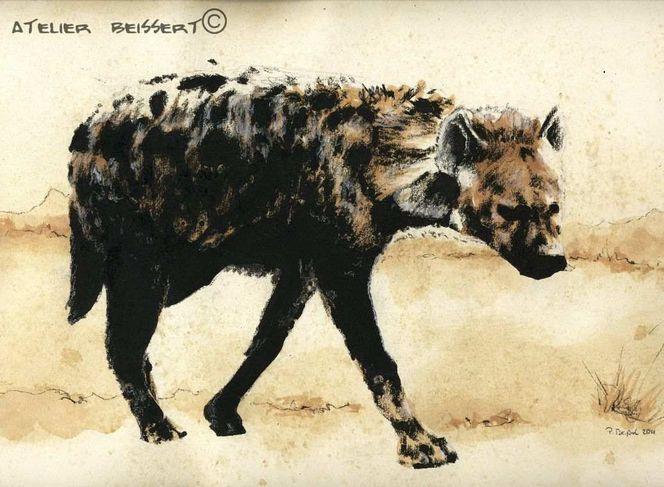 Hyaeninae, Tiere, Hyäne, Katzenartige, Tüpfelhyäne, Leipzig