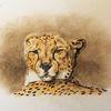 Gepard, Afrika, Zoo, Katze