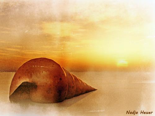Turmschnecke, Sonnenuntergang, Strand, Schneckenhaus, Stille, Sand