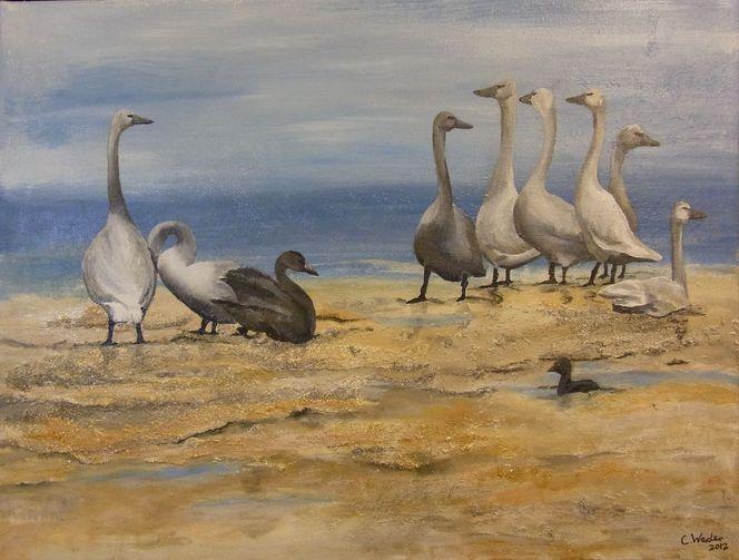 See, Tiere, Singschwäne, Wasser, Nordsee, Vogel