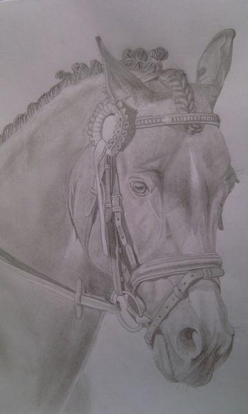 Bleistift pferd, Tiere, Zeichnungen, Pferdeportrait
