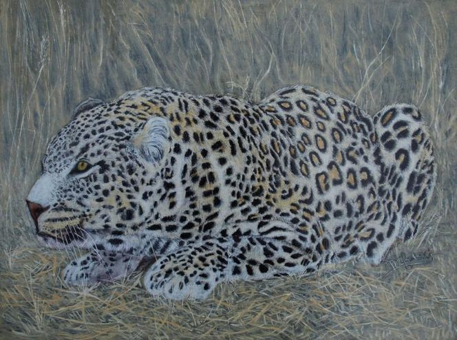 Raubkatzr, Leopard, Haare, Fell, Malerei, Tiere