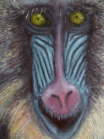 Mandrill, Affe, Haare, Augen, Malerei, Tiere