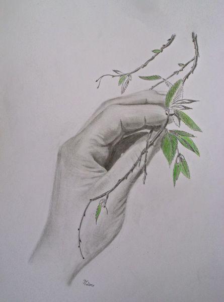 Natur, Zweig, Blätter, Hand, Bleistiftzeichnung, Grün