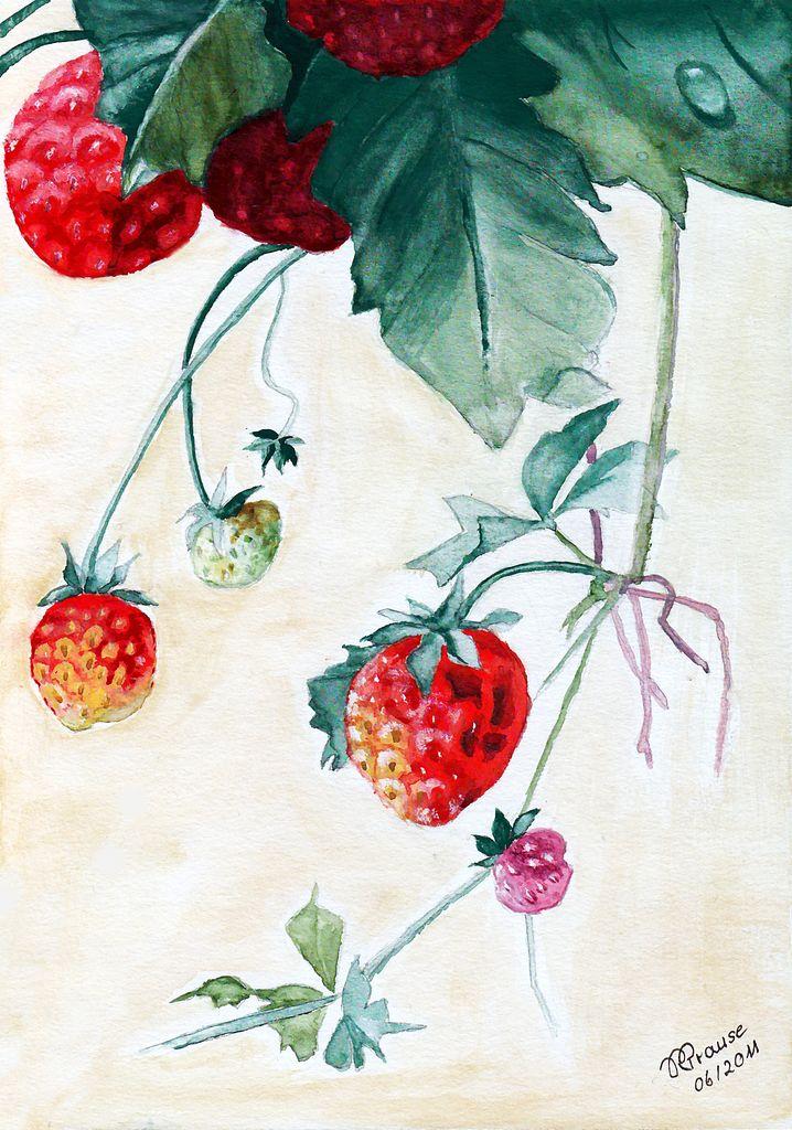Aquarellmalerei Obst - 111 Bilder und Ideen - gemalt - auf KunstNet