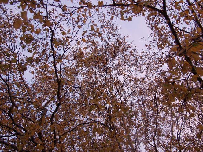 Herbstimpresionen, Himmel, Herbst, Baum, Digitale kunst, Natur