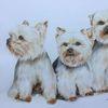 Aquarellmalerei, Yorkshire terrier, Tierportrait, Aquarell