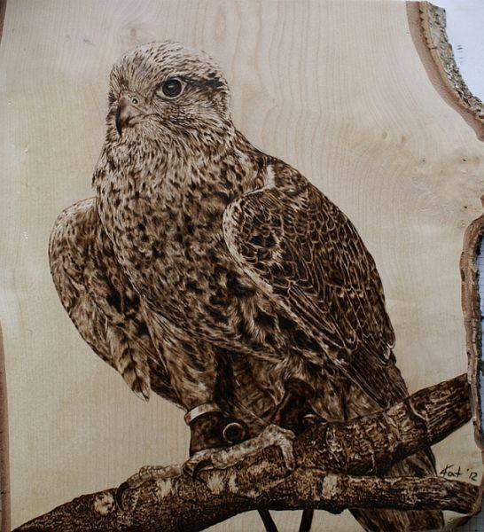 Pyrografie, Holz, Tiere, Tierportrait, Greifvogel, Falke