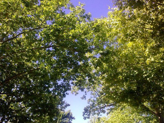 Sonnenstrahlen, Baum, Himmel, Malerei, Pflanzen