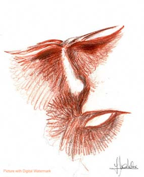 Gesicht, Beijaflor, Rötel, Kolibri, Malerei, Kopf