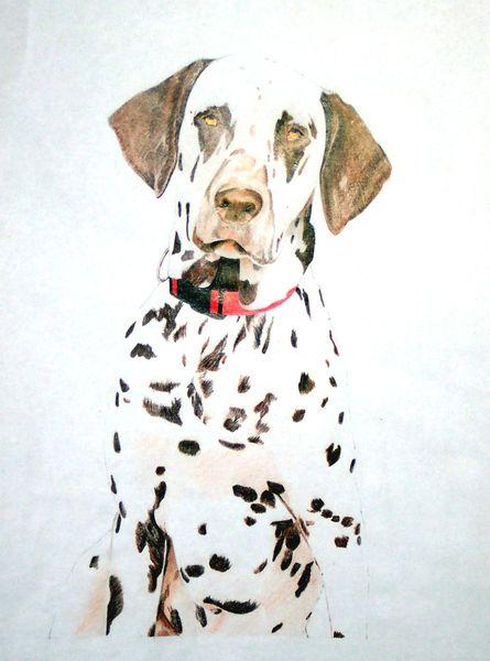 Malerei, Dalmatiner