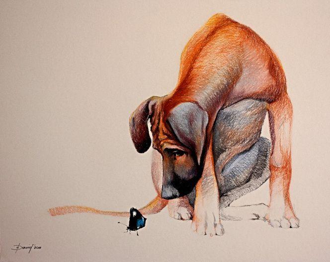 Tiere, Hundezeichnung, Tiermalerei, Hund, Rhodesian, Orange