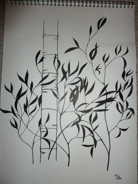Bambus, Zeichnungen