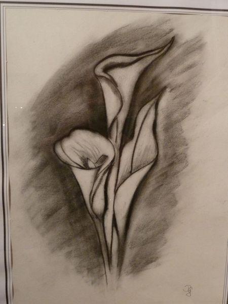 Blumen, Zeichnungen, Pflanzen, Calla