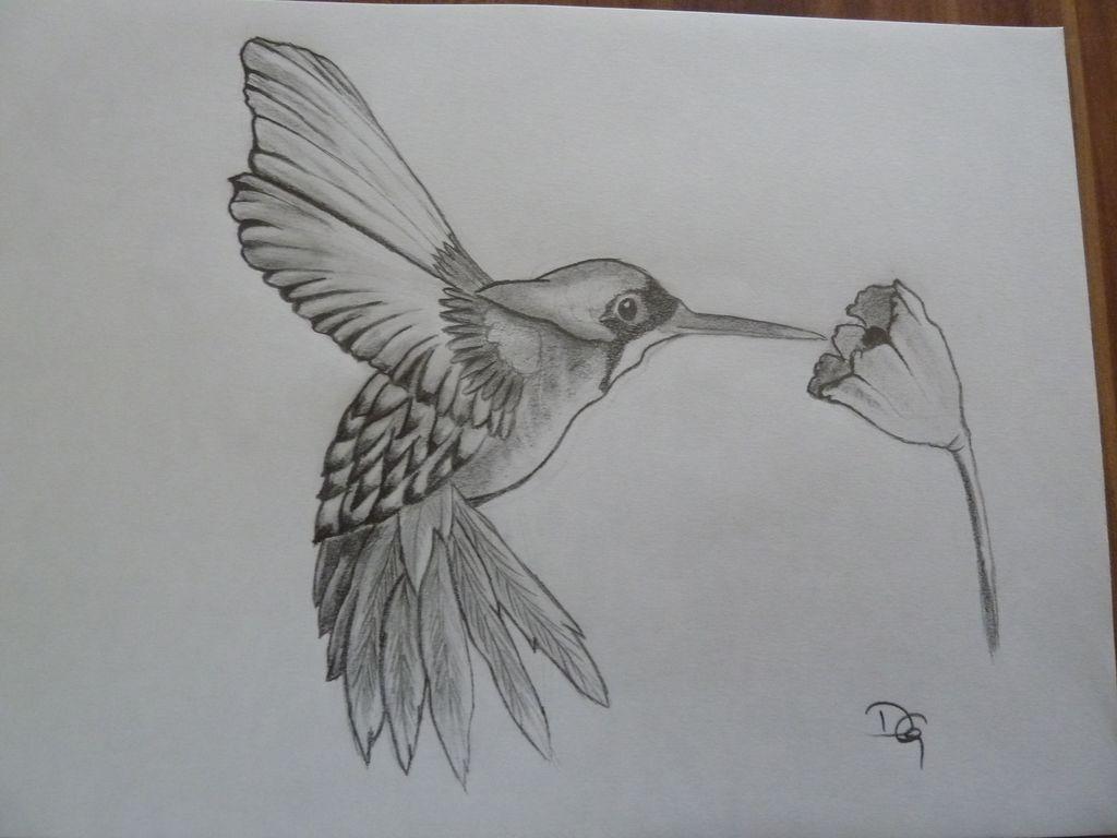 Kolibri Bleistiftzeichnung Natur Vogel Blume Mit Vogel Von