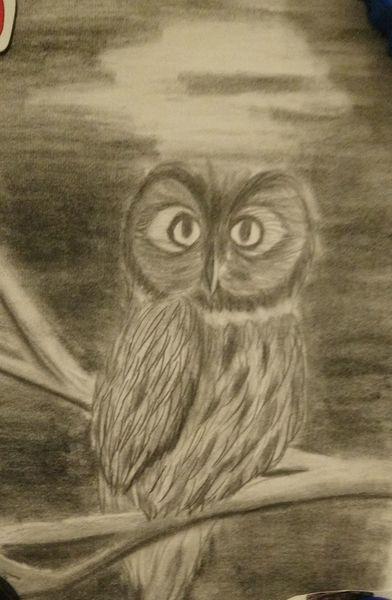 Kauz, Mondschein, Nacht, Bleistiftzeichnung, Zeichnungen