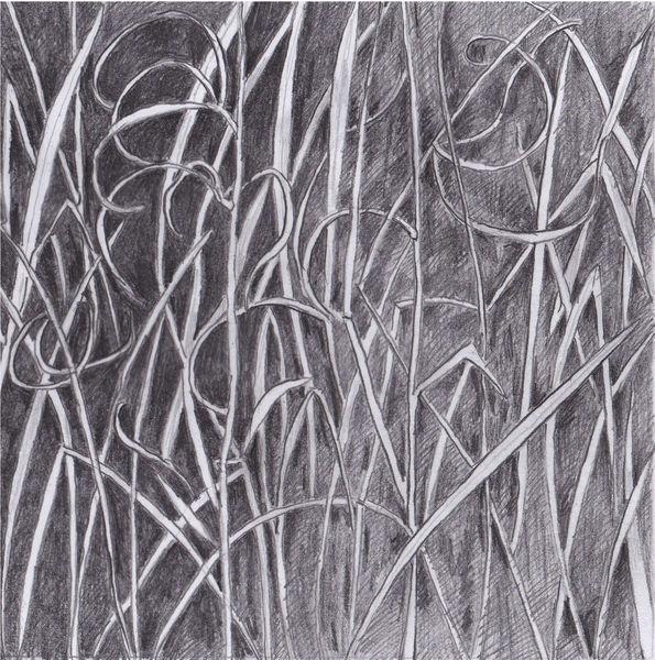Pflanzen, Natur, Zeichnung, Bleistiftzeichnung, Zeichnungen